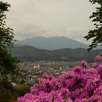 笠間つつじ公園 Kasama Azalea Park