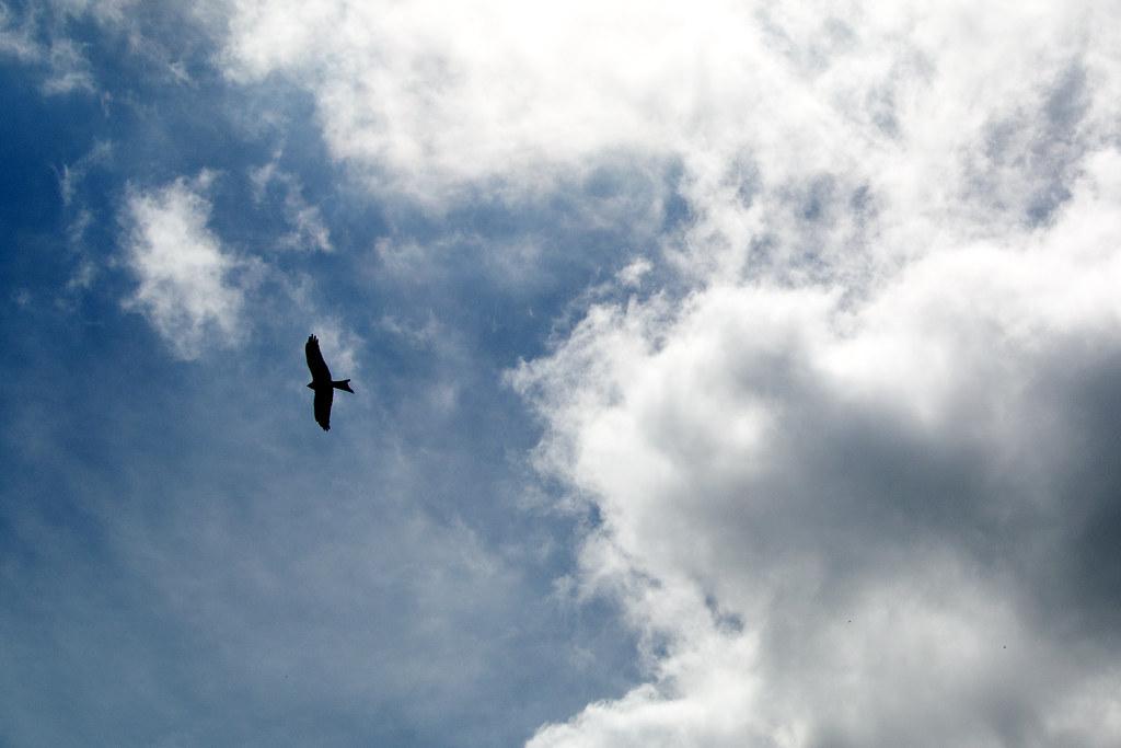 Red Kite Princes Risborough to Great Missenden