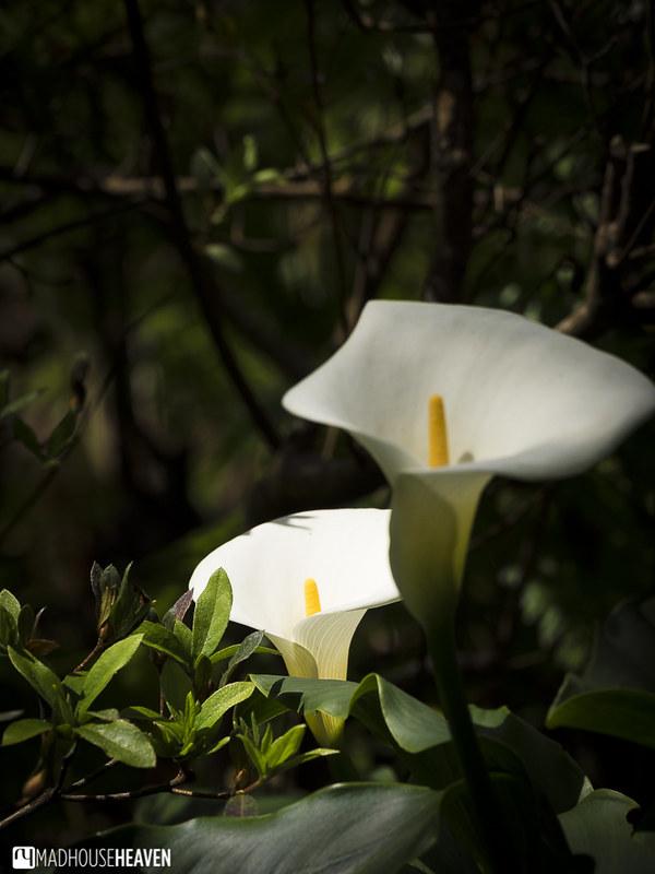Madeira - 0632