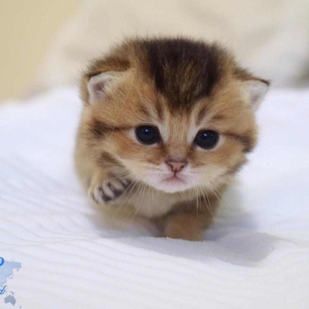 Hello world     #catsofinstagram #kitten #kittensofinstagr