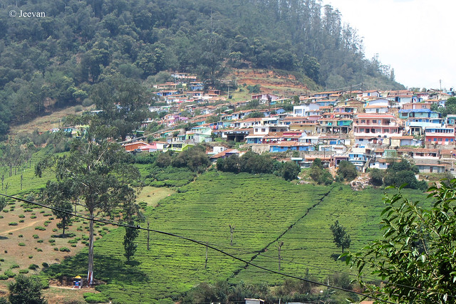 Houses on Elk hill,  Ooty