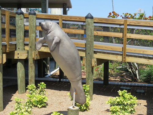 manateesculpture tecomanateeviewingcenter apollobeach hillsboroughcounty florida usa prout geraldwayneprout canon canonpowershotsx60hs powershot sx60 hs digital camera photographed photography manatee sculpture teco viewingcenter apollo beach hillsborough county conservation stateofflorida
