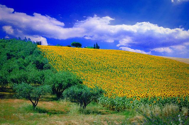 landscape - Marche