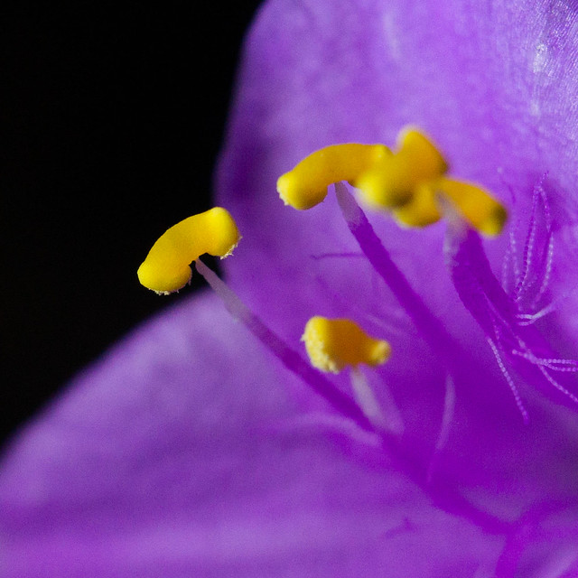 Anthers on display