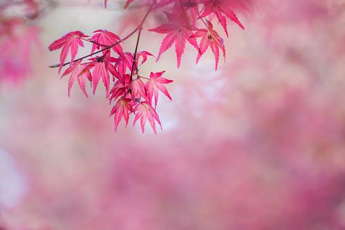 春なのに・・・ | by hiroching