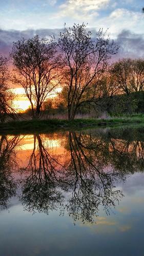 sunrise reflectingcolor spring trees serene stillwater riverside