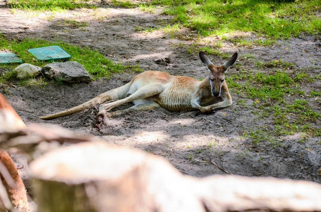 Kangaroo ToL gardens