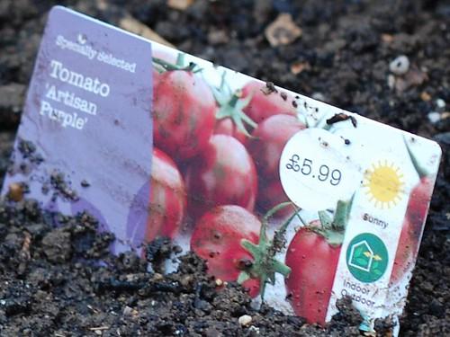 Solanum lycopersicum 'Artisan Purple' Label