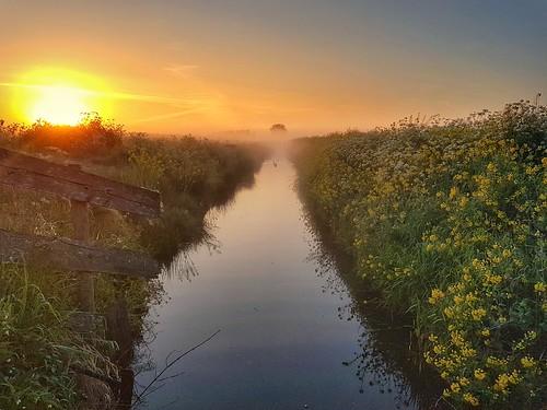 sunrise ditch sloot water eend canard flower fence hek serene fog jaco verheul orange green outdoor early phonephoto samsung landscape sky sun duck goose tree