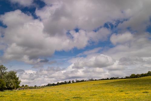 batford buttercups fields harpenden hertfordshire roantrum mf17