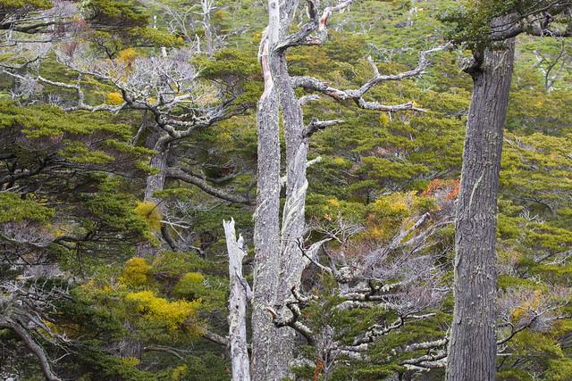 Bosque subantártico