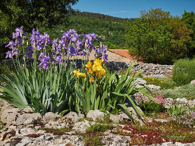 Slum na Ćićariji: vrtovi cvijeća s kamenjara kod gospođe Anite