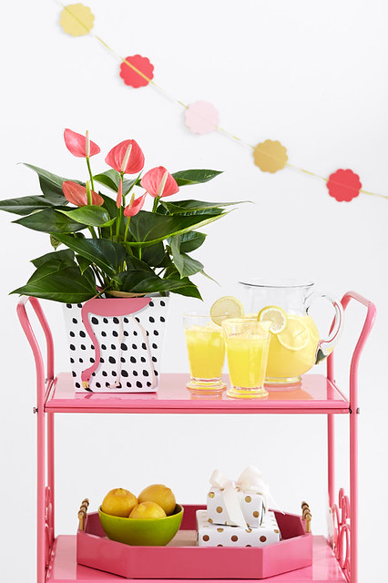 Pink Anthurium lily plant on cart with bowl of lemons, lemonade in glasses and pitcher and wrapped gifts