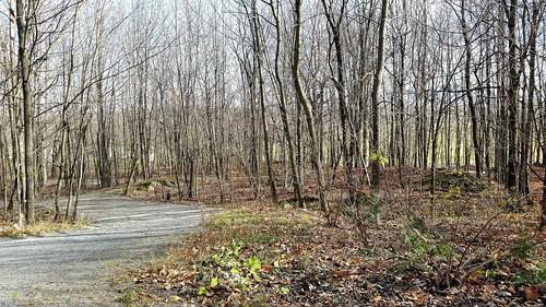 parcterryfox granby quebec canada sentier trail arbre tree végétation nature ville city paysage bois wood parc park touristique automne fall branche