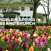 Mundelein Spring Mass and Brunch 2017