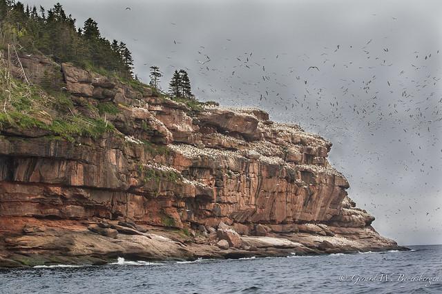 Bonaventure Island, Quebec