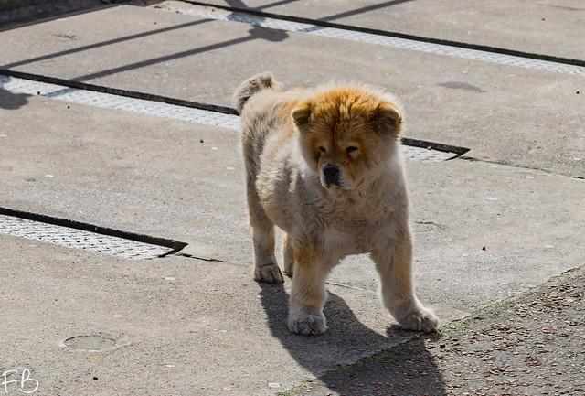 Cute Little Doggy Woggy