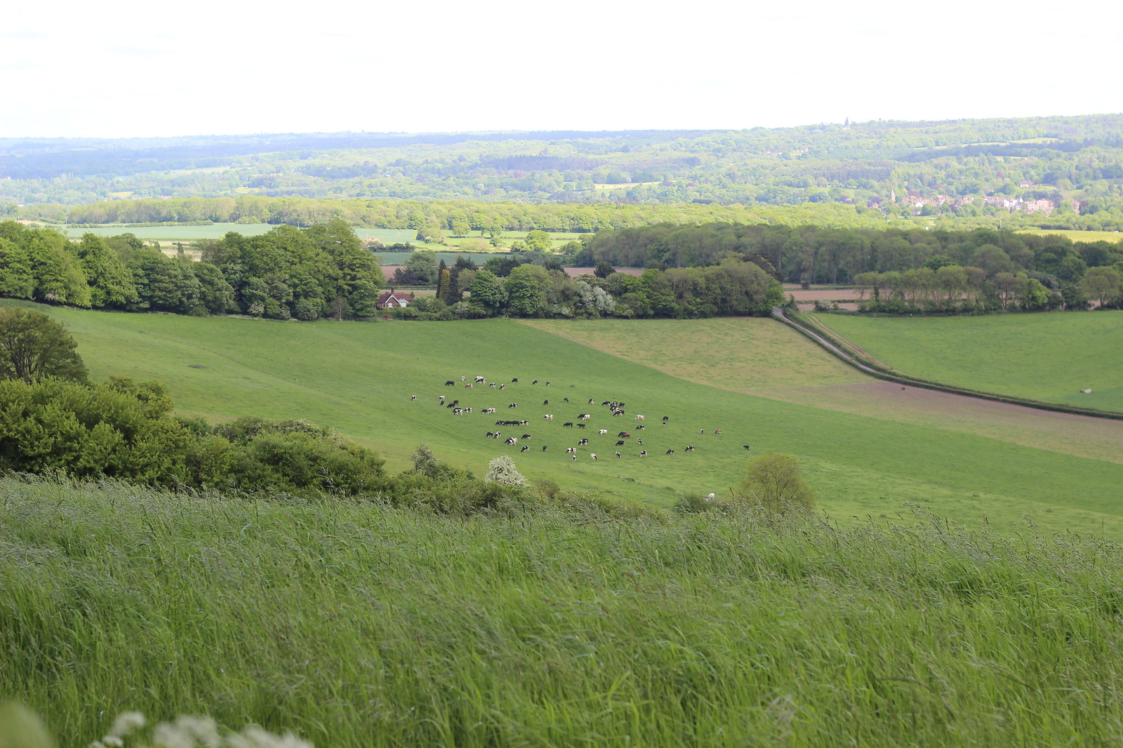 Caterham to Knockholt walk
