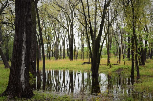 forest water landscape reflection trees woods spring vernal pool west ridge nature preserve chicago