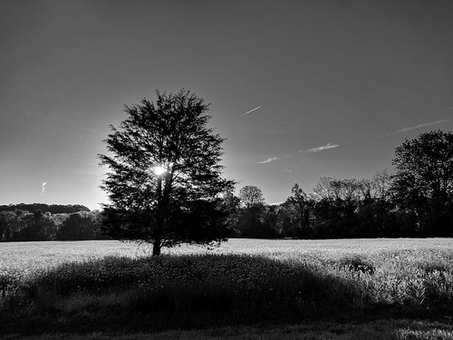 tree blackwhite nature scenics landscape commute morningsky bwwednesday