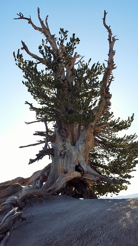 lovzhike mt baden powel memorial weekend 2016 angeles national forest camping hiking backpacking pct hike camp summit views sunset sunrise wonderlust simple life family brother loving