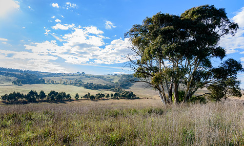 grass autumn landscape gumtree australia pasture nonurban rural nature newsouthwales clouds agriculture countryside scene country scenery paddocks travel grassland scenic fields outdoors green trees nsw centralwest field