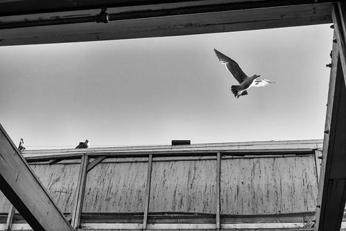 Sky Window | by hin_man