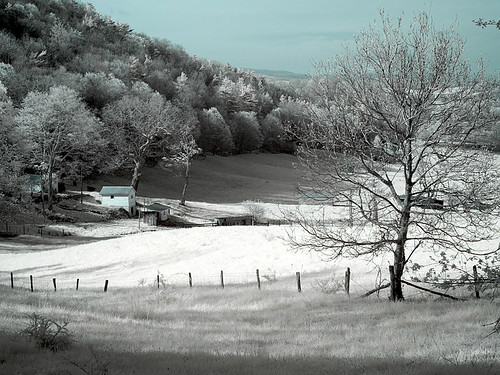 Photo Workshop -Infrared 03 | by KathyCat102