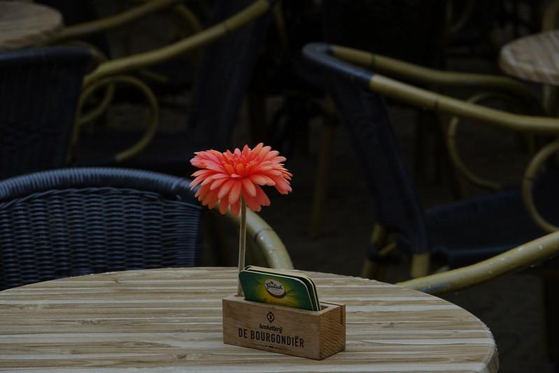 Bloem op het terras Delft