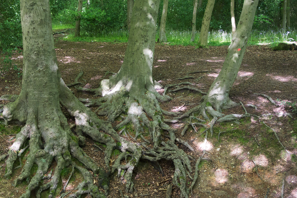 Roots Princes Risborough to Great Missenden