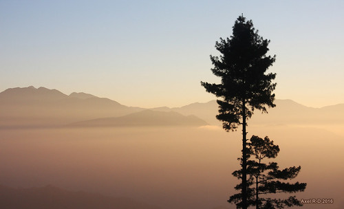 arbre brouillard leblu leverdesoleil montagnes nepal préci salyanvdc solukhumbu