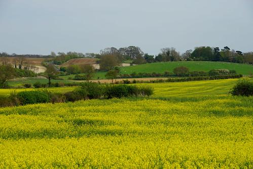 clothall herts hertfordshire countryside country field fields spring springtime uk unitedkingdom england english british britain yellow crops oilseedrape