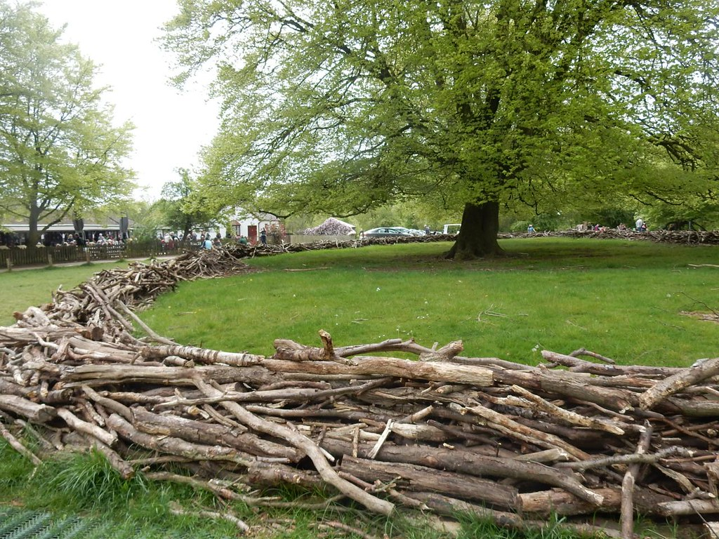 Deadwood corral Protecting tree roots near the caff. Tring to Berkhamsted