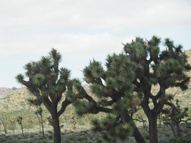 Q3256683 Joshua Tree National Park