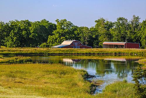 texas chappellhill washingtoncounty field tree postoak pond landscape sky spring reflections may wyojones np