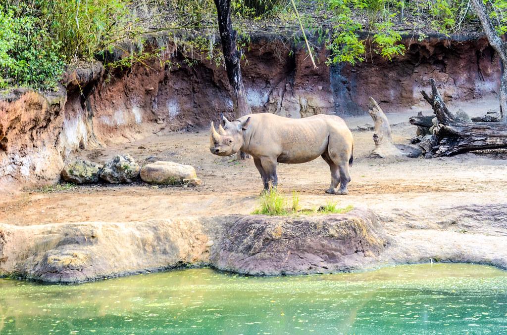 Rhino safari water AK