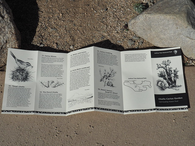 Q3266959 Joshua Tree National Park Cholla Cactus Garden brochure page 2