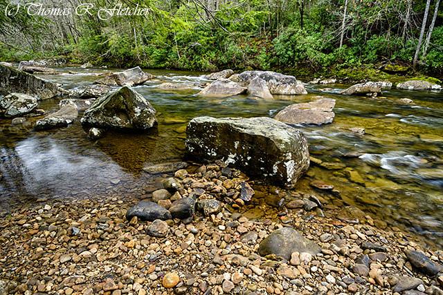 Spring along Cranberry River