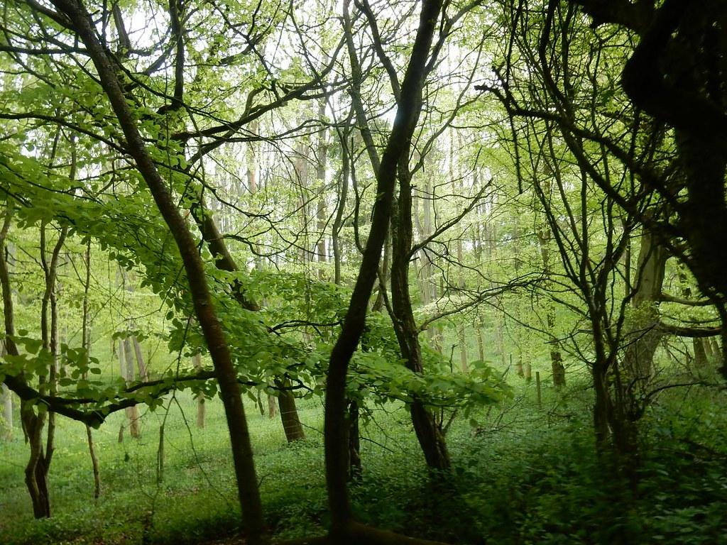 Alpine Meadow Wood Tring to Berkhamsted