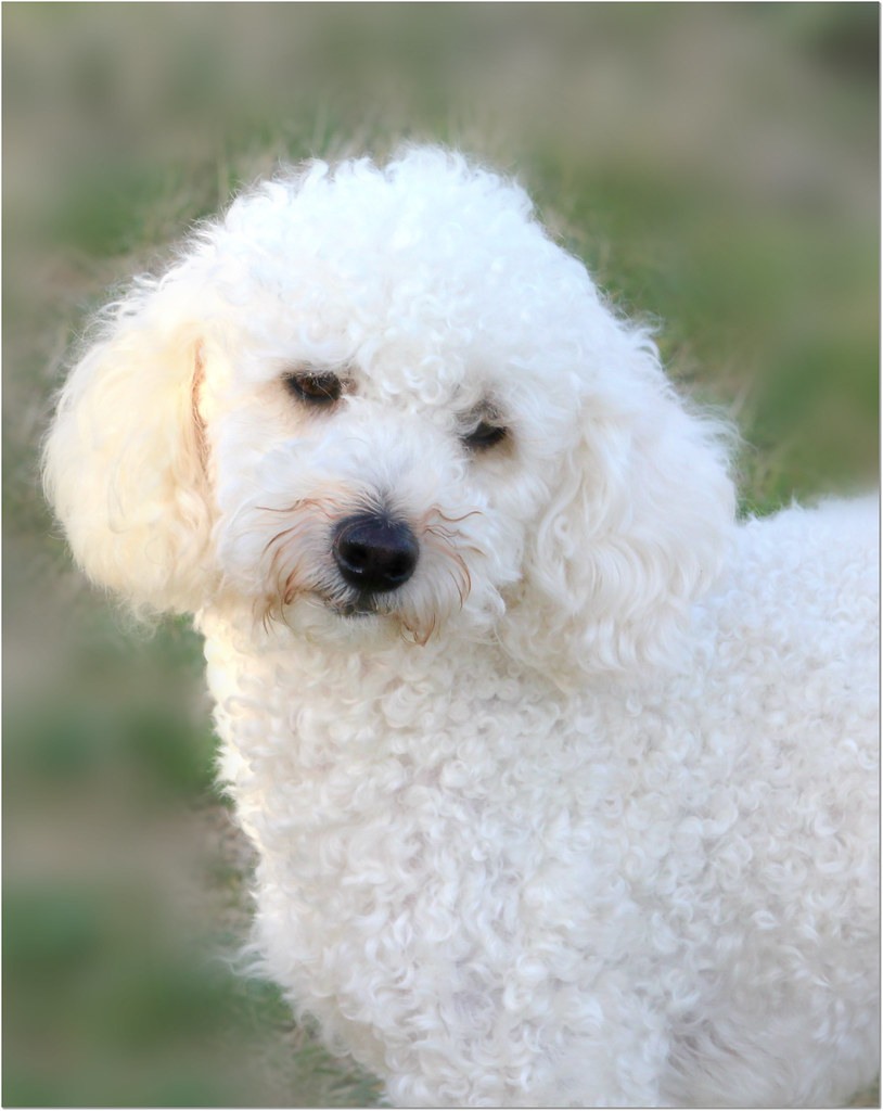 Little dog  🐶