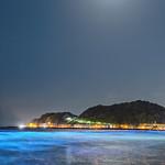 鎌倉 夜光虫