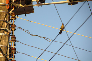 Love and fight on a wire 1 | by Aztlek