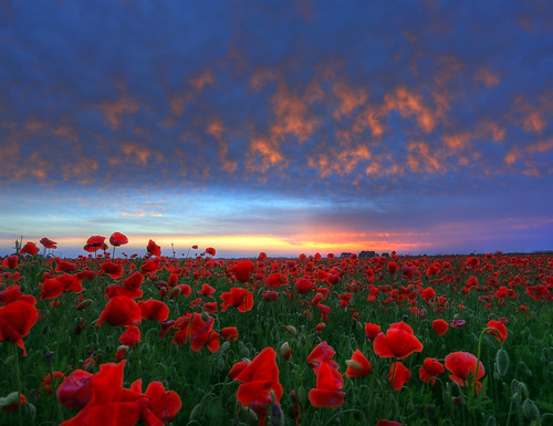 papaveri poppies nuvole clouds alba dawn paradise dream passion love wonder meraviglia quartodaltino venezia