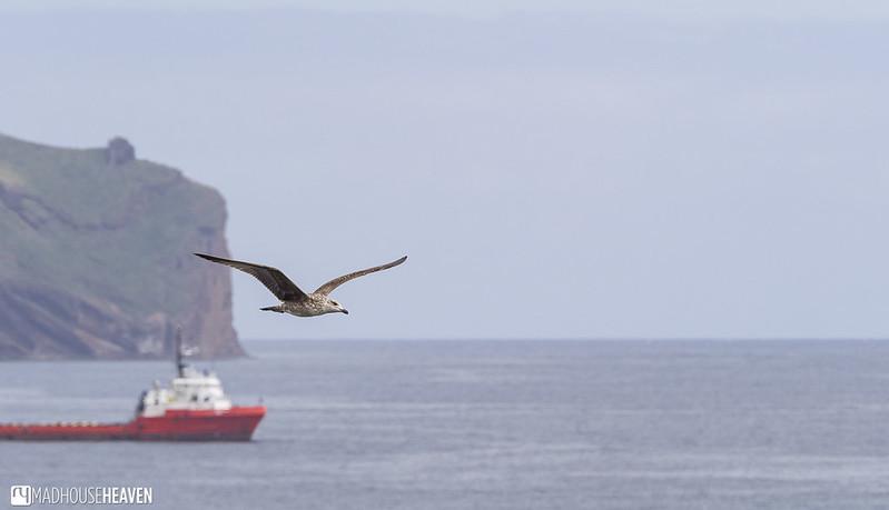 Madeira - 0915