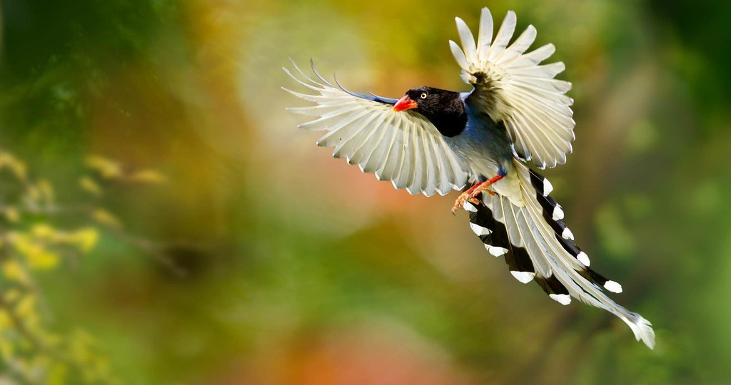 Animal Wallpaper Hd Birds Hd Images Nature Animals Flickr