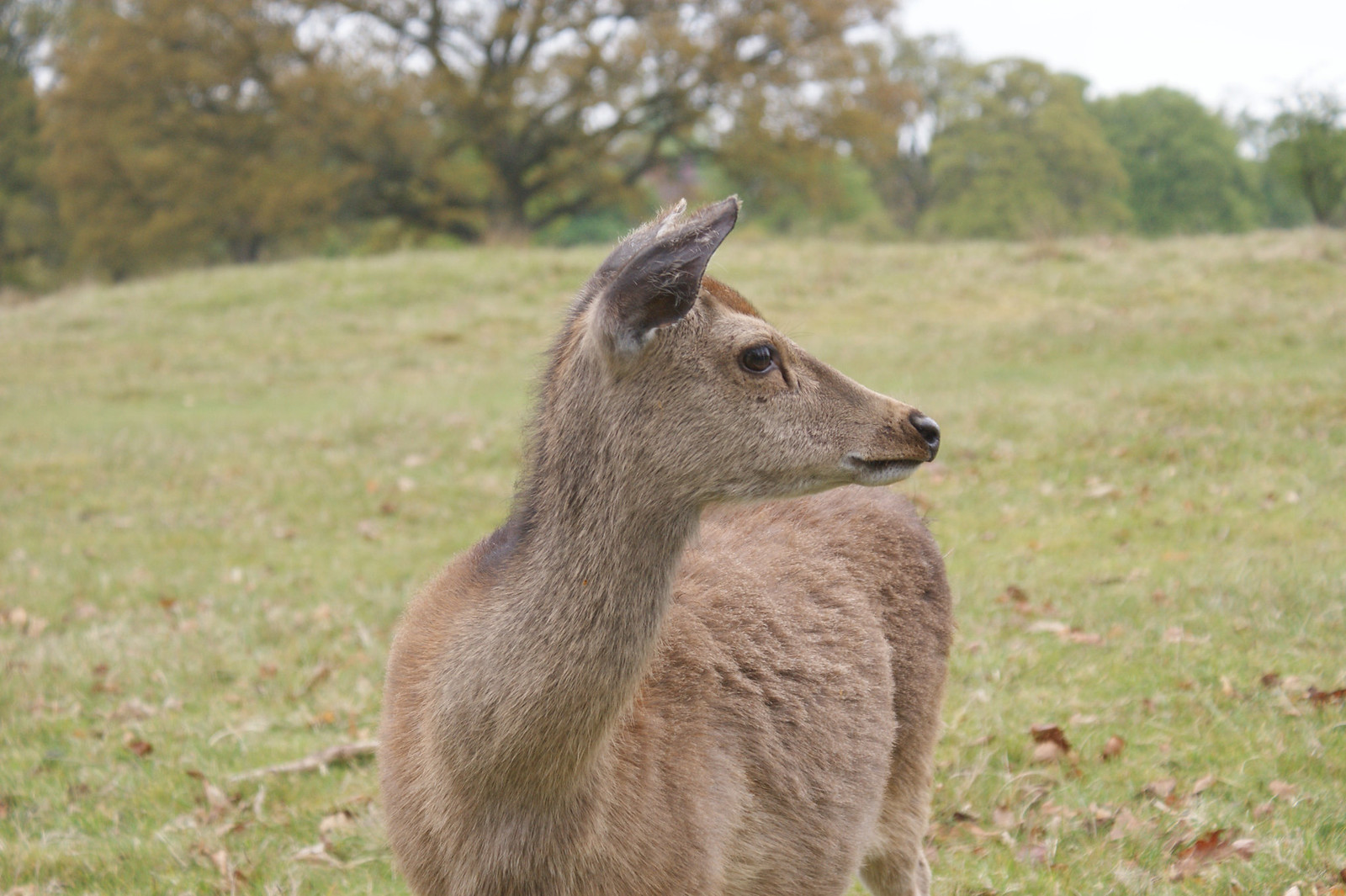Knole Park - Side view please SONY DSC