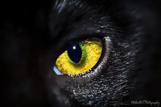 Cat's Eye IMG_5902-1