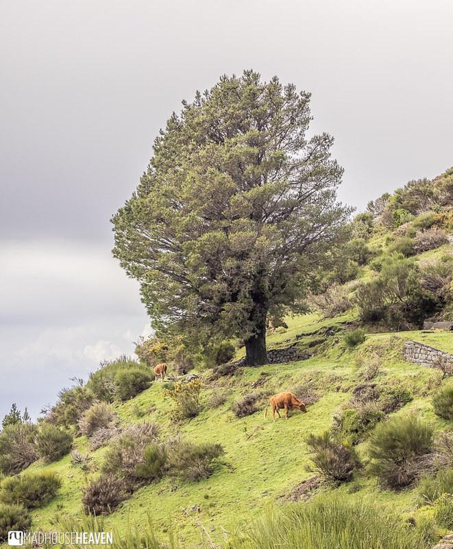 Madeira - 0145-HDR