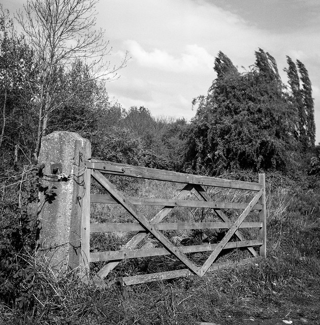 FILM - The gate to where the dogs used to play