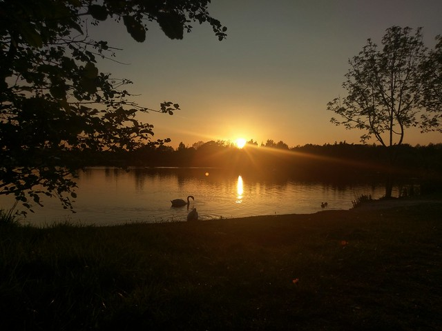 Htc 10 #photography #sunset #sunsetgram #swan #lake #sunset_madness